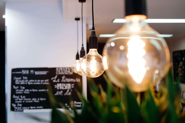 燈泡,植物