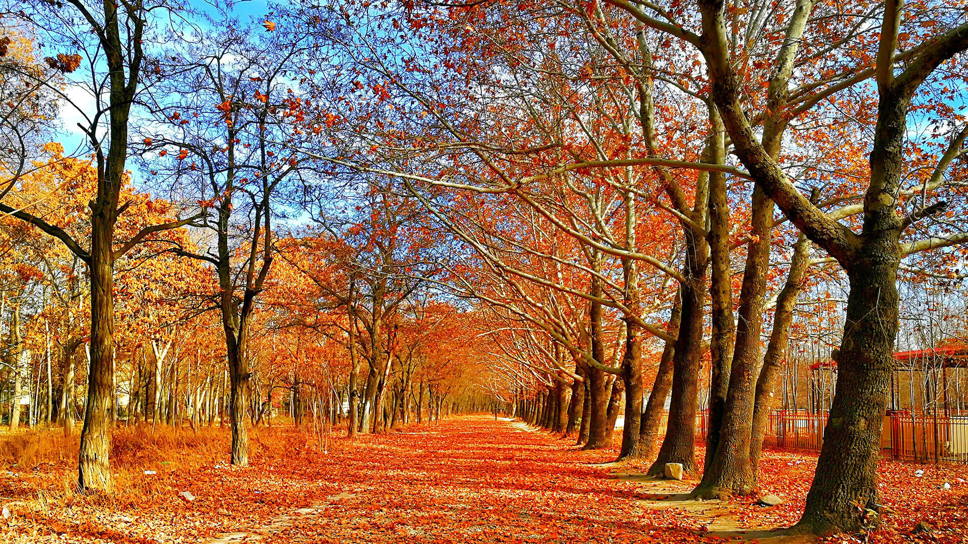autumn-leaves-blue-sky-bright-693521